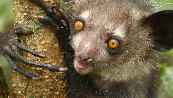 У какого животного большие глаза