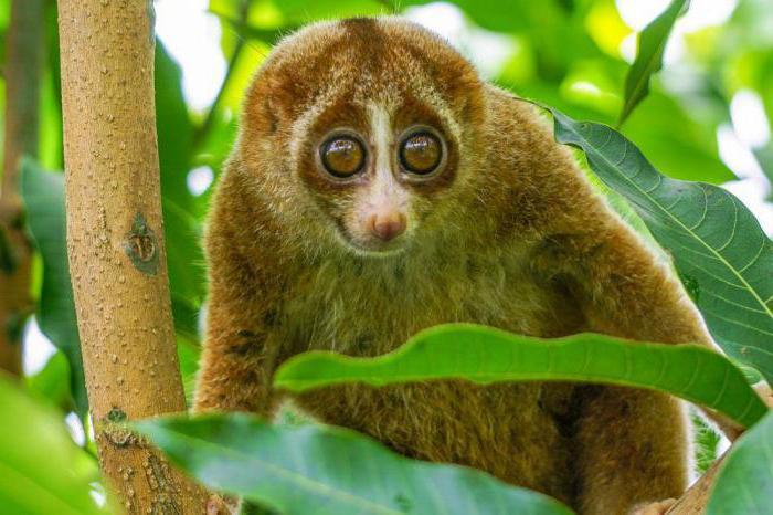 Милое животное с большими глазами