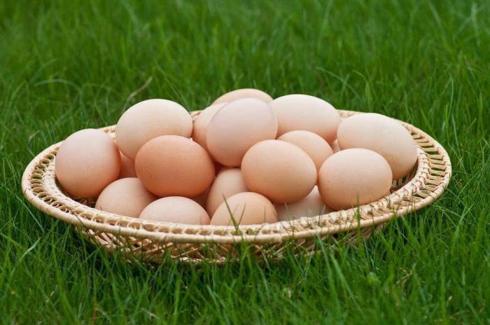 Wyandot breed chickens silver
