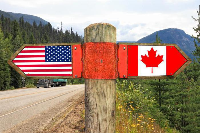 Мелколепестник канадский: описание