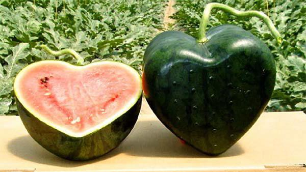 Is it possible to eat watermelons in July for pregnant women?
