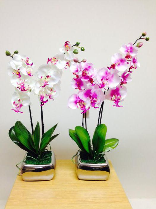 The value of the flower orchid