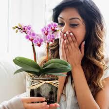 Jrhideya the value of a flower