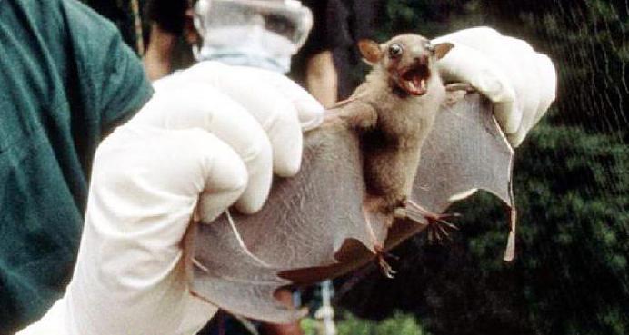 как избавиться от летучих мышей на даче