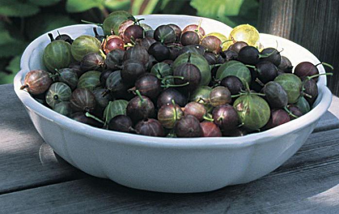 black gooseberry compote