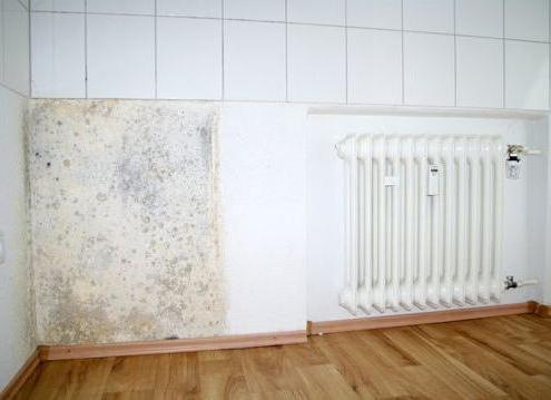 than to process a wall from a mold and a fungus