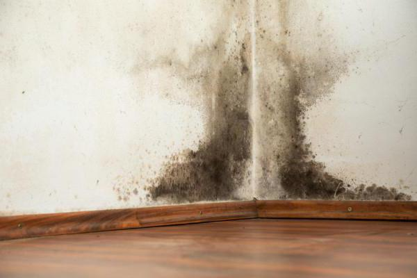 than to treat the wall of mold and mildew folk remedies