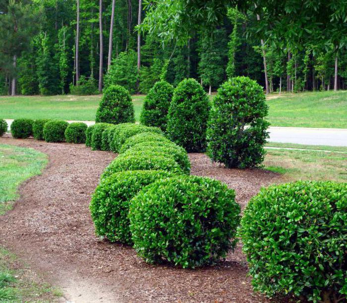 Pokok Buah Dan Renek Untuk Plot