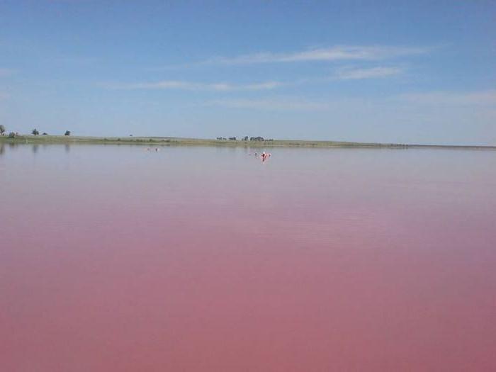 алтай розовое озеро где находится