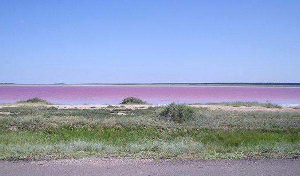 розовое озеро на алтае фото