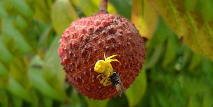 эвкалиптовый мед полезные свойства