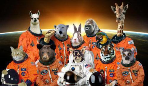 космические первооткрыватели первые животные