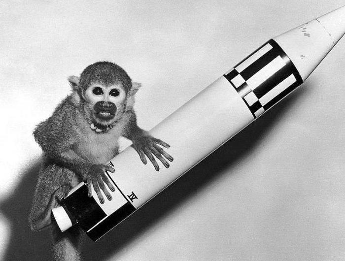 первое животное в космосе