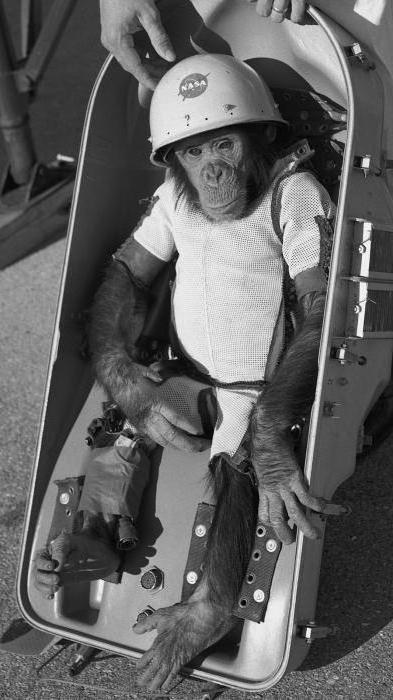 первое животное запущенное в космос