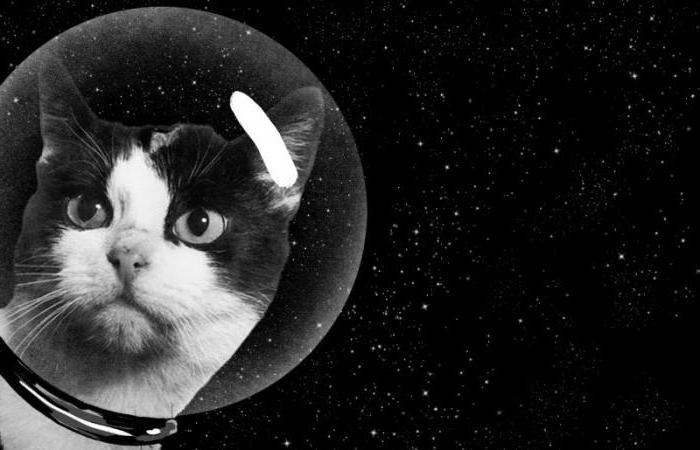 кто из живых существ первым полетел в космос