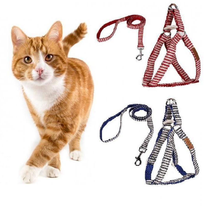 что постоянно шлейка для кошек как одеть в картинках эффекты