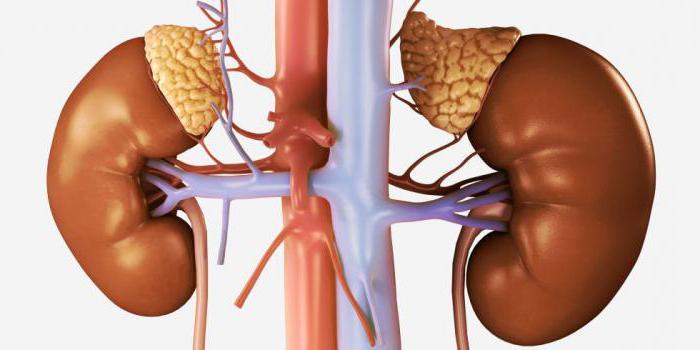 treatment of adrenal adenoma folk remedies