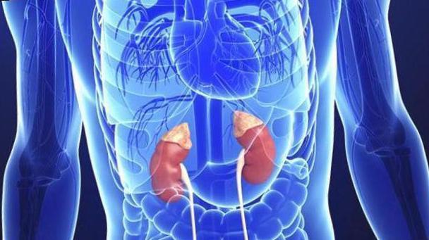 treatment of folk adrenal glands