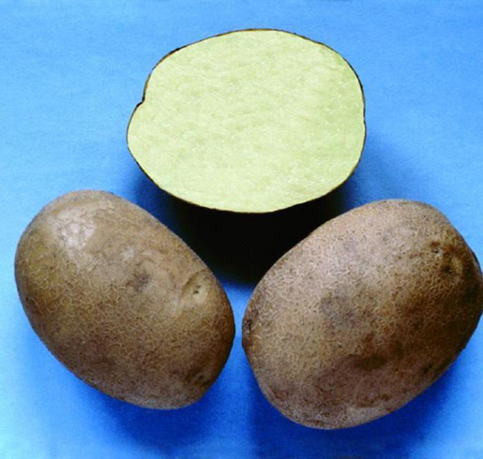 breeze potatoes