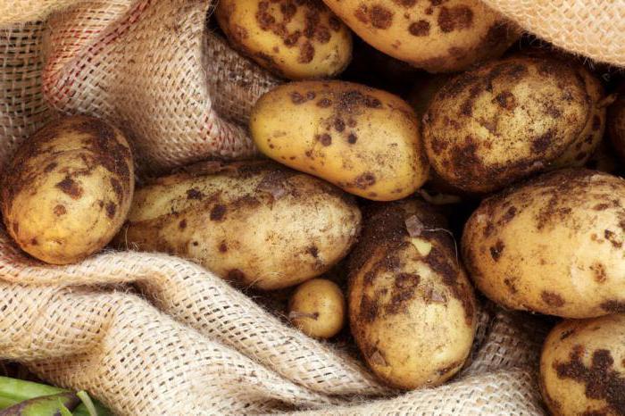 potato breeze varieties reviews