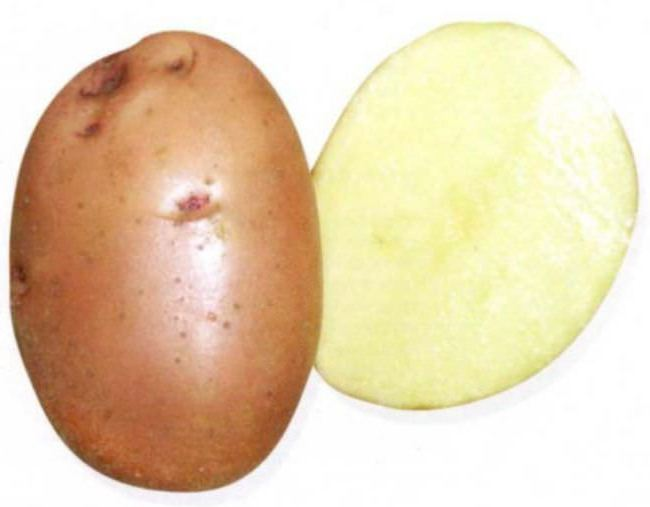 after which to plant potatoes