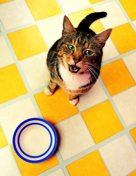 гипоаллергенный корм для кошек роял канин отзывы
