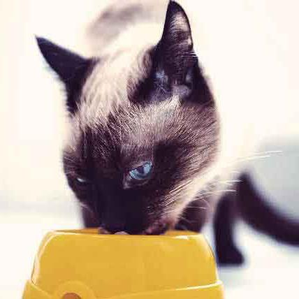 корм наша марка гипоаллергенный для кошек отзывы