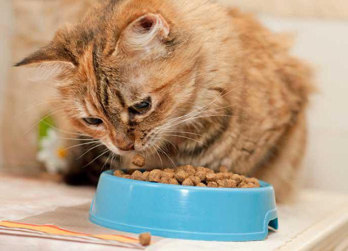 гипоаллергенный сухой корм для кошек отзывы