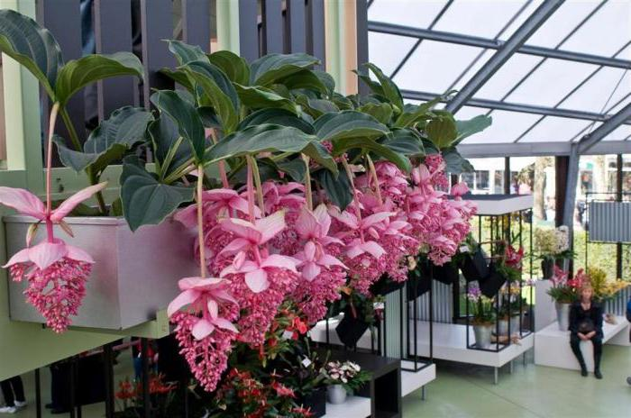 the most expensive flowers in the world