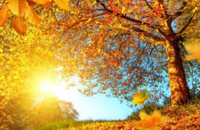 autumn status
