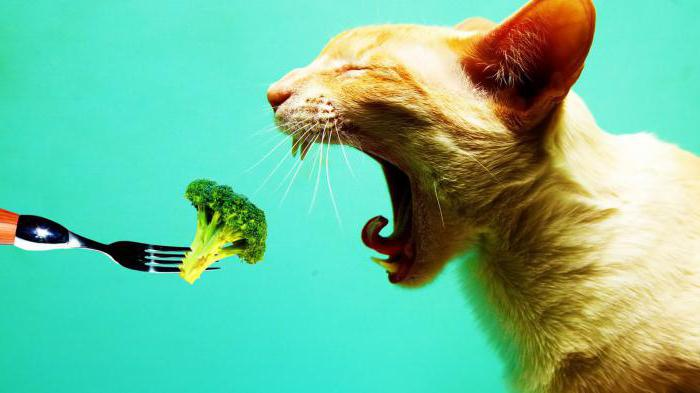 cat food our brand reviews