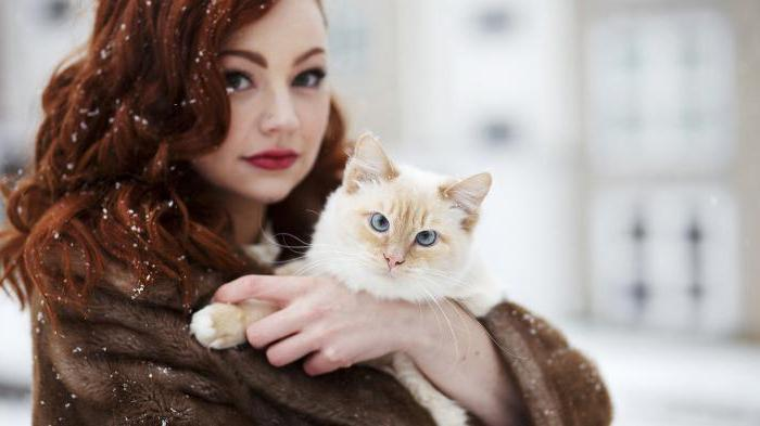 our brand cat food reviews veterinarians