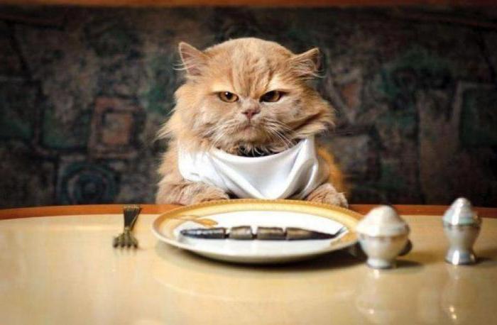 кот не ест сухой корм почему
