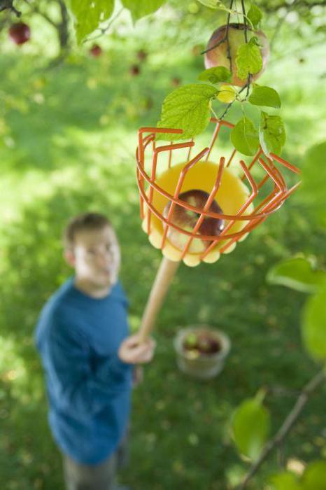 приспособление для сбора яблок