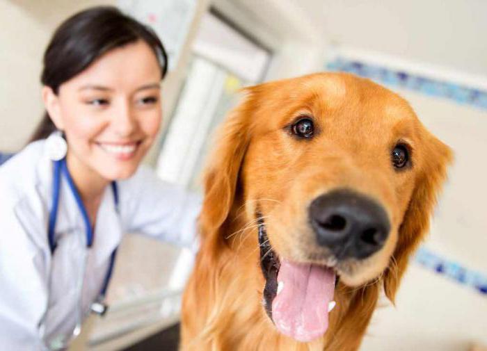 энцефалит у собак симптомы