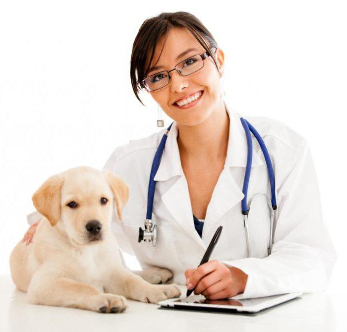 лечение энцефалита у собак