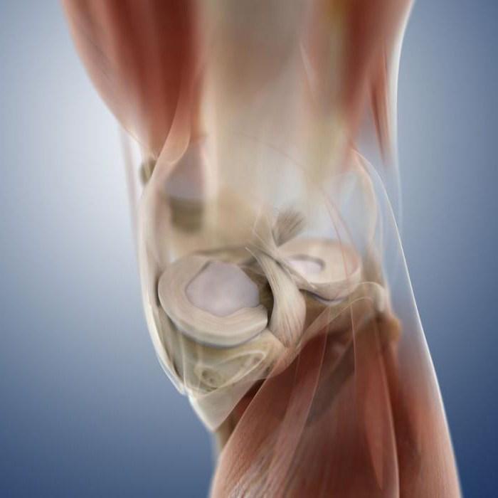 что такое мениск коленного сустава