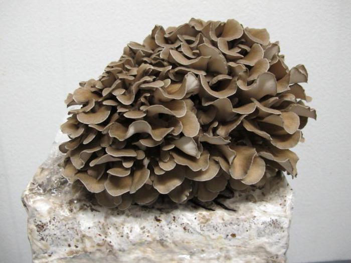 mushroom cultivation as a business