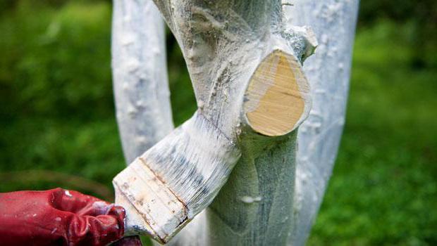 краска для побелки садовых деревьев