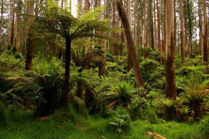 какие живые организмы освоили почвенную среду обитания