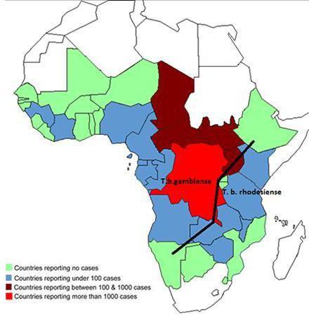 Переносчик и возбудитель сонной болезни. Жизненный цикл трипаносомы. Африканский трипаносомоз