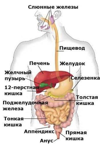 Анализ крови на СА 19-9: что означает, расшифровка. Онкомаркер СА 19-9 - раковый антиген поджелудочной железы