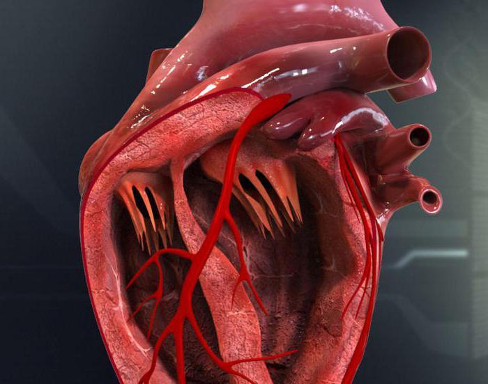 Автоматия сердца - описание, механизм и особенности