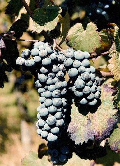 lambrusco wine sparkling red reviews