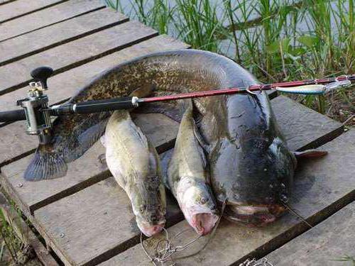 клев рыбы в первоуральске