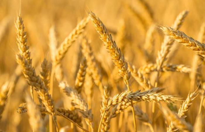 крупы из пшеницы виды названия