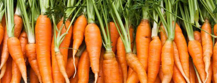 какие семена моркови лучше