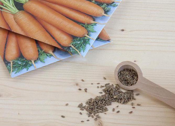 самые лучшие семена моркови