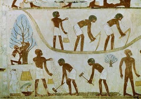 tax collection in ancient Egypt