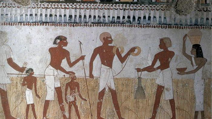 tax collector in ancient Egypt